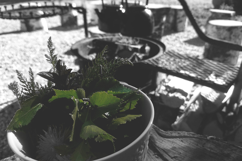 Nokkosta kasvamassa ruukussa