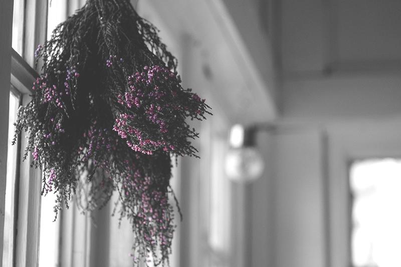 Kasveja roikkumassa ikkunan edessä